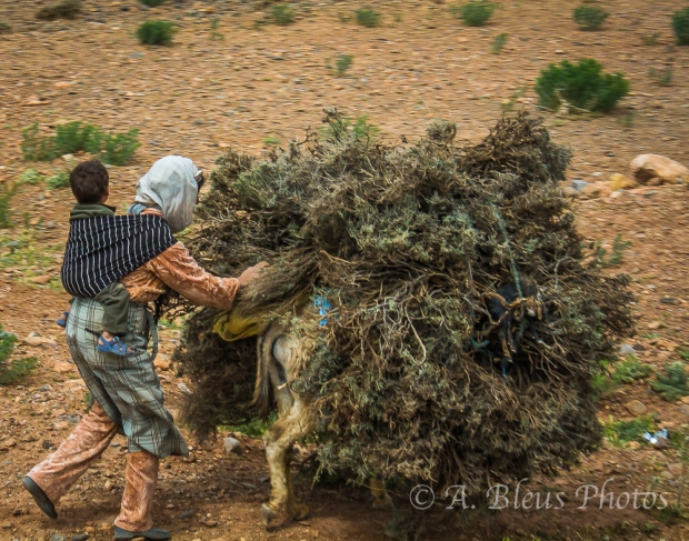 Mother, Son & Donky, Middle Atlas Mountains,  Morocco
