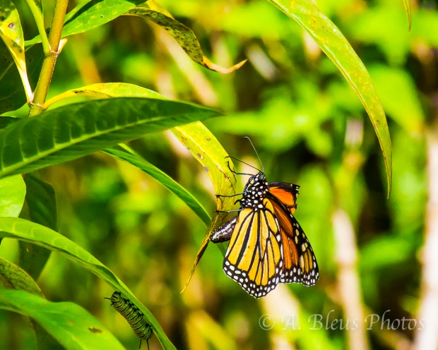 The Monarch and the Caterpillar