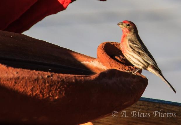 Bird in Baja California 2, Mexico