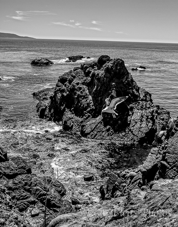 Ensenada, Baja California Sea B&W, Mexico_7095