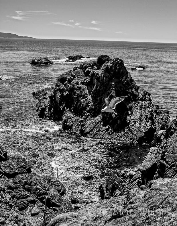 Ensenada, Baja California Sea B&W, Mexico_7095