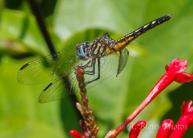 Dragonflies Macro-2