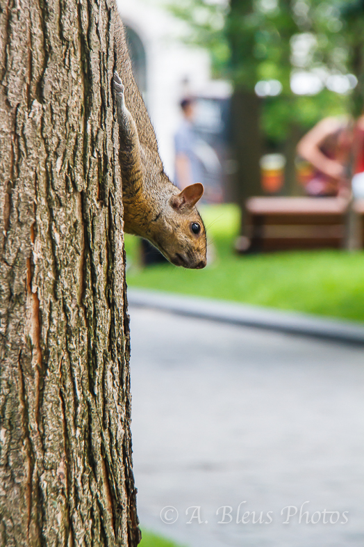 Upside down Squirrel,  Montreal