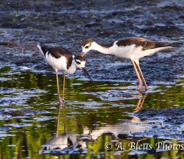Two Stilts_0419