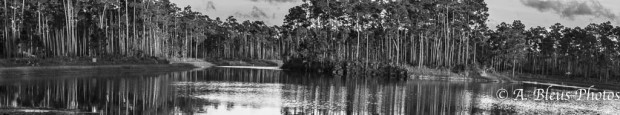 Everglades National Park, Florida - Long Pine Key in B&W MG-2870