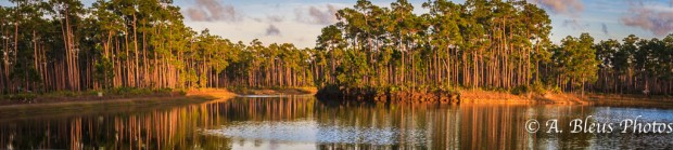 Everglades National Park, Florida - Long Pine Key MG-2841