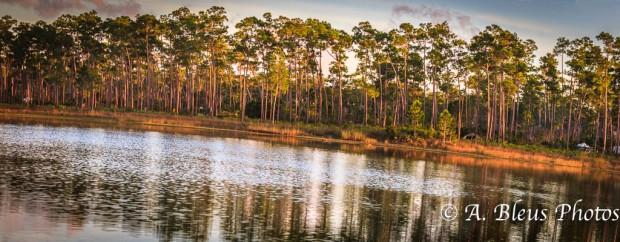 Everglades National Park, Florida - Long Pine Key MG-2850