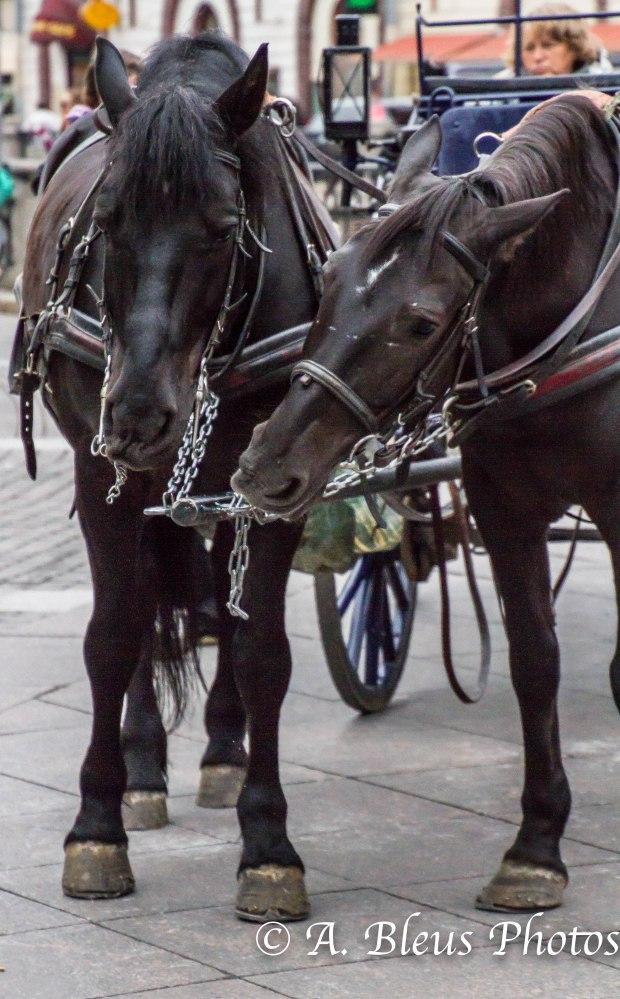 Horses 3, MG_9964