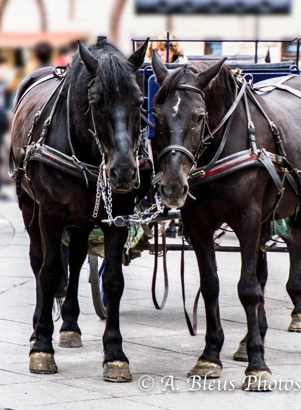 Horses, MG_9960