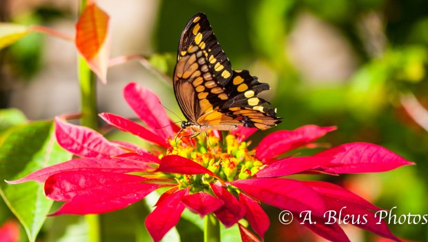 Butterfly on Plant MG_416