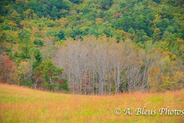 Cades Cove - Great Smoky Mountains, NC MG_9866