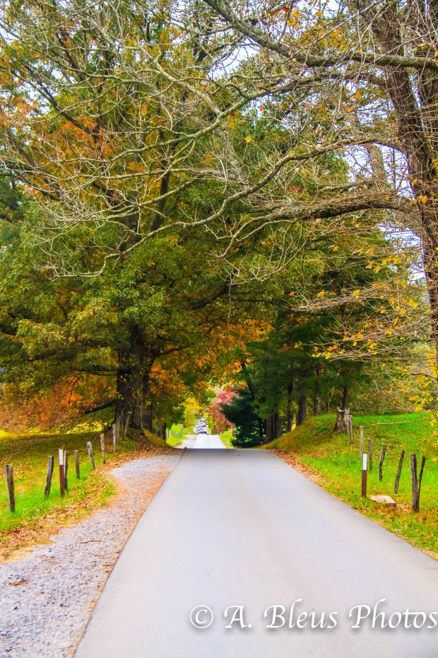 Cades Cove main road - Great Smoky Mountains, NC _9867