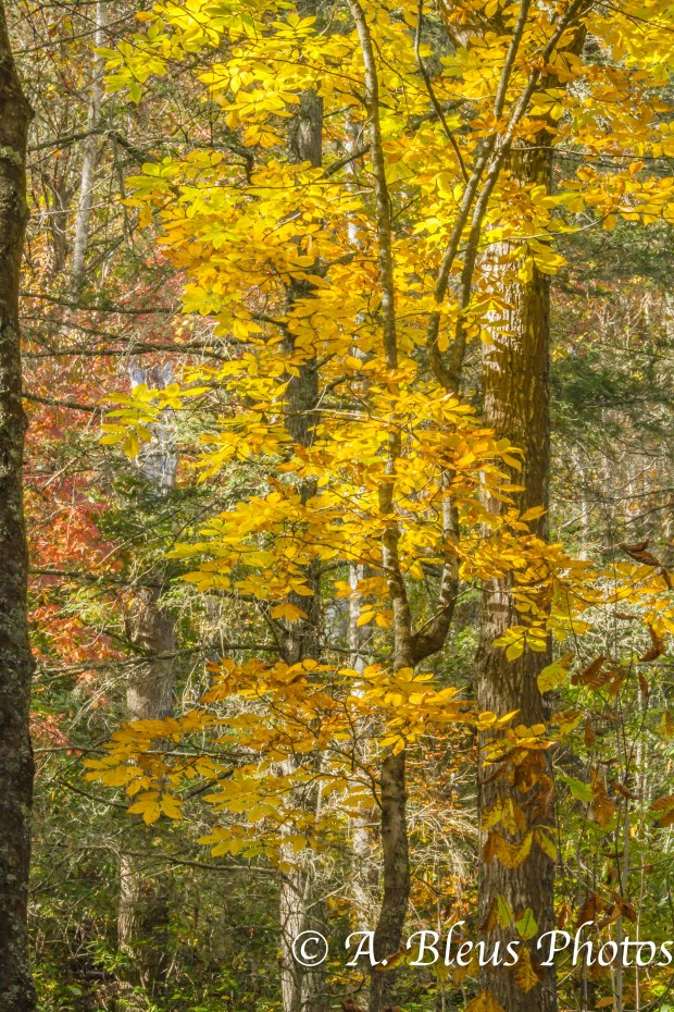 Fall colors of North Carolina MG_9661