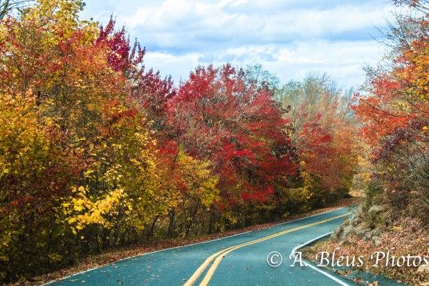 Fall colors on the Blue Ridge Parkway,  North Carolina MG_9780