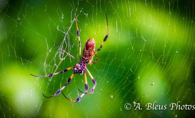 Spider _ 93E4320