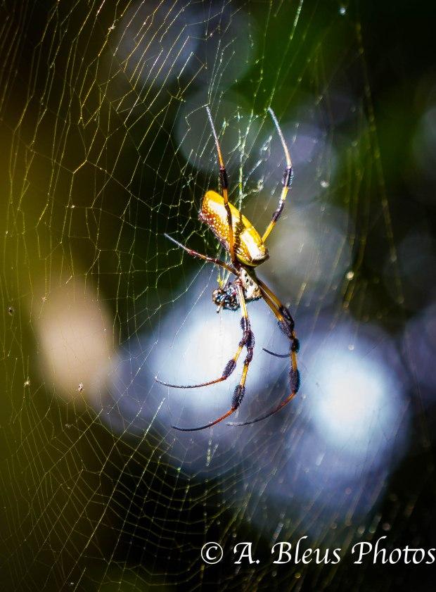 Spider _ 93E4325