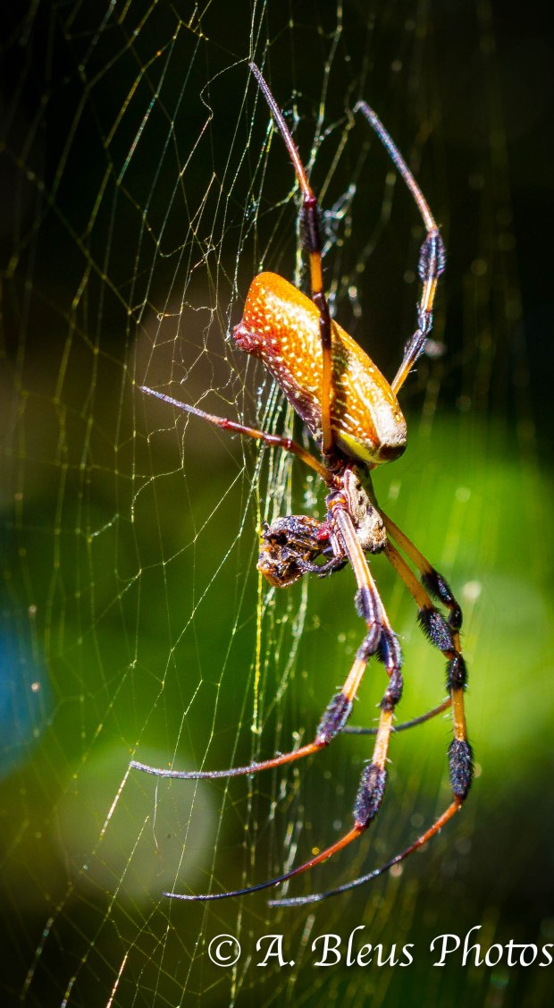 Spider _ 93E4329