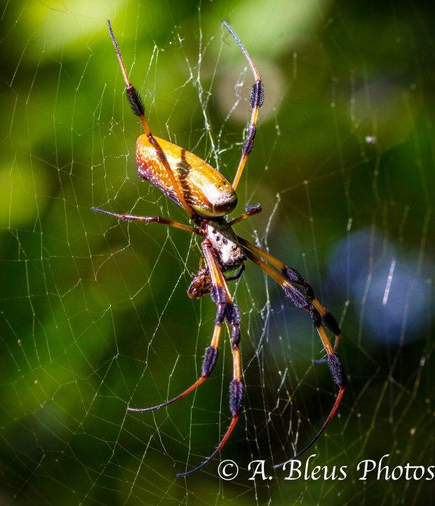 Spider _ 93E4331