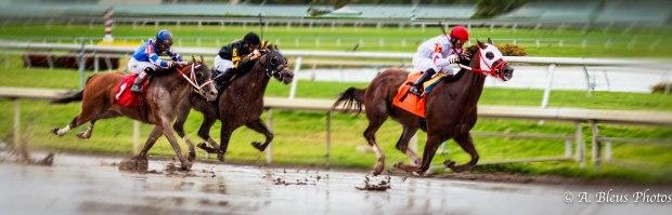 Horse Race_93E1528