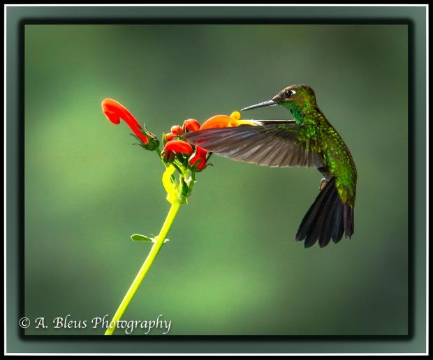 hummingbird-mg_5384