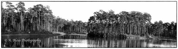 long-pine-key-pano-in-bw-mg_2859
