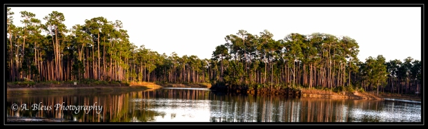 long-pine-key-pano-in-color-mg_2859