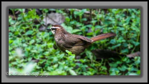 brown-feathered-bird-chengdu