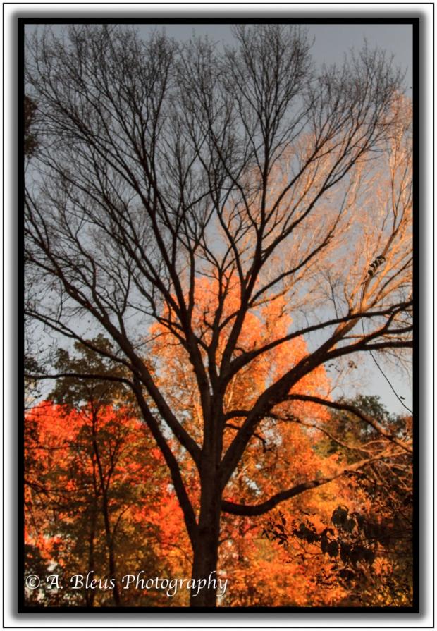 burning-bush-central-park-ny-mg_1125