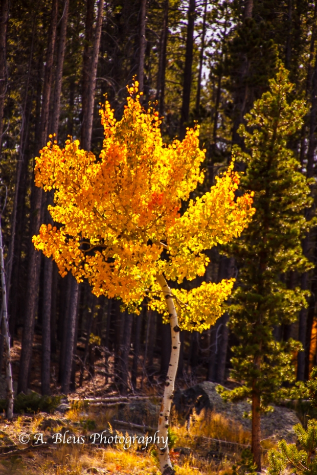 colors-of-rmnp-colorado_93e1750-2
