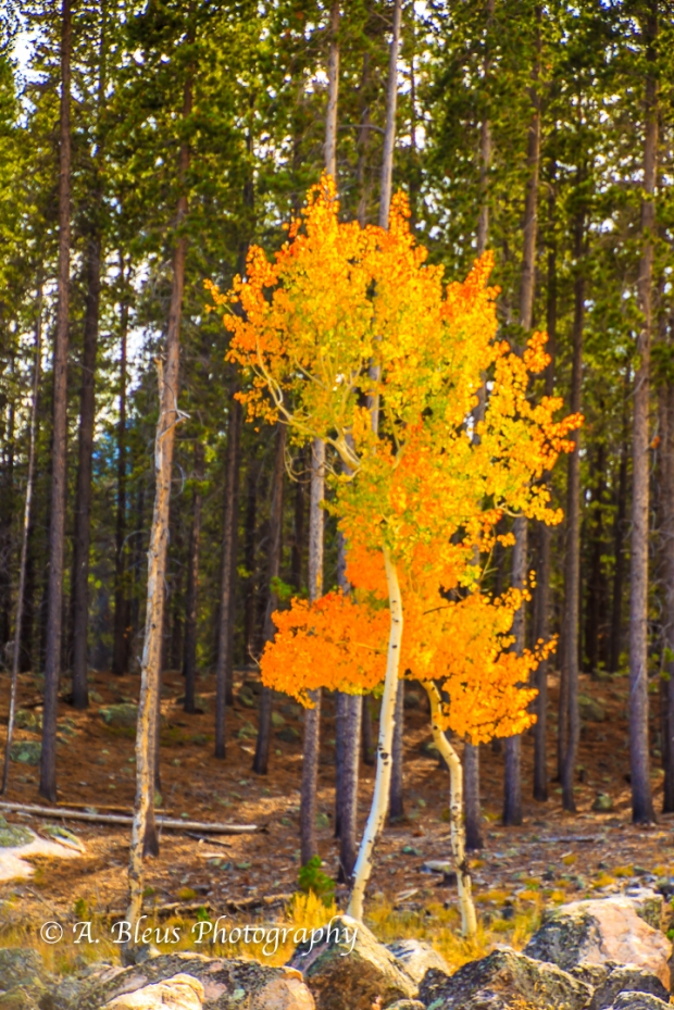 colors-of-rmnp-colorado_93e1750-3