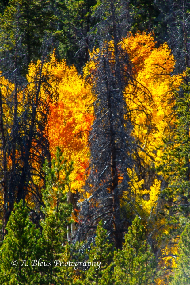 colors-of-rmnp-colorado_93e1750