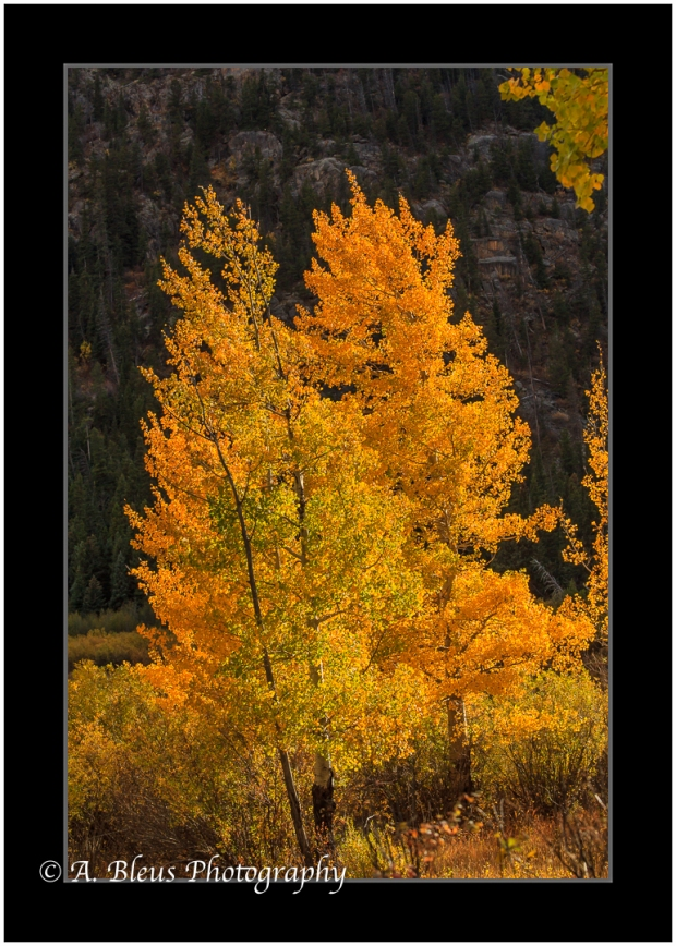 colors-of-rmnp-colorado_93e2239