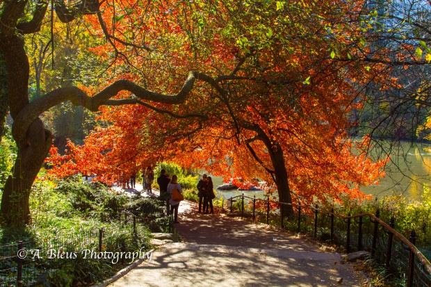 fall-colors-in-central-park-ny-mg_1156-2