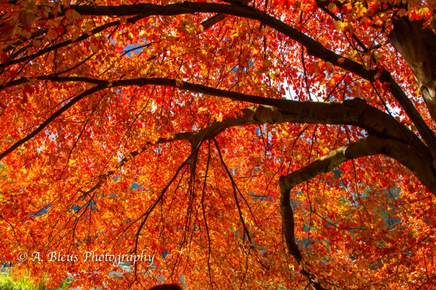 fall-colors-in-central-park-ny-mg_1156-3