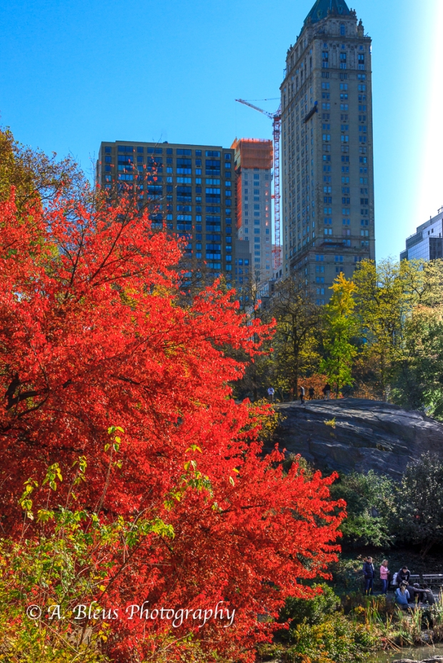 fall-colors-in-central-park-ny-mg_1156