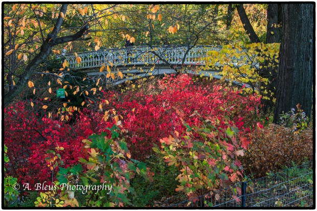fall-in-central-park-new-york-mg_0989