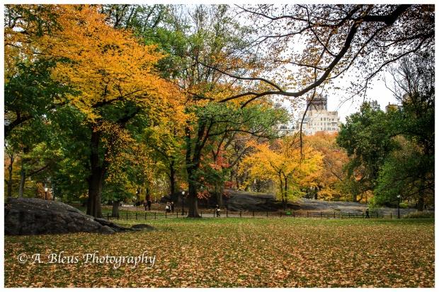 fall-in-central-park-ny-mg_1425