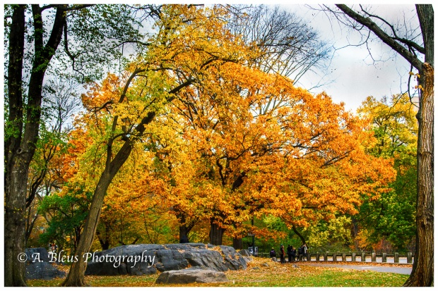 fall-in-central-park-ny-mg_1442