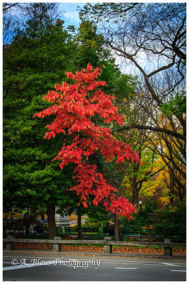 fall-in-central-park-ny-mg_1443