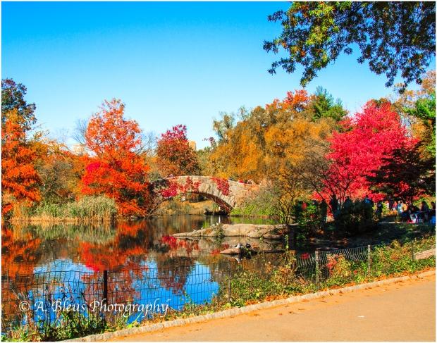 Gapstow Bridge Central Park, NY MG_1181.jpg