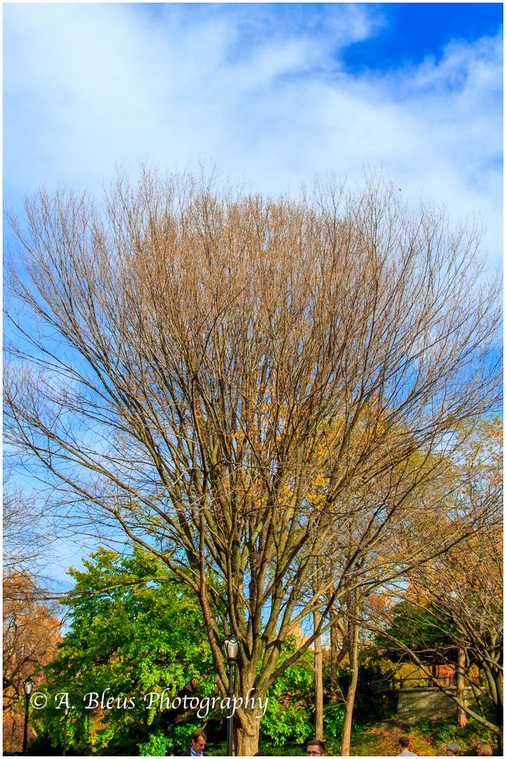 leafless-trees-central-park-ny-mg_1247-2