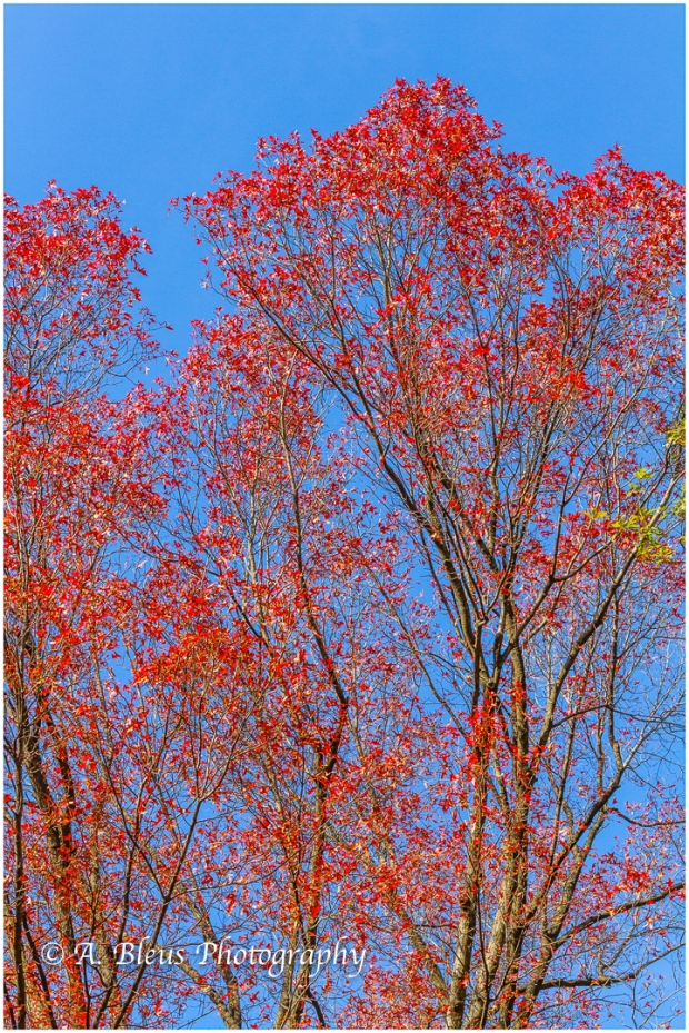 red-blue-central-park-ny-mg_1240