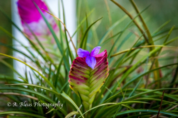 bromeliad-flower-on-flower_93e3958