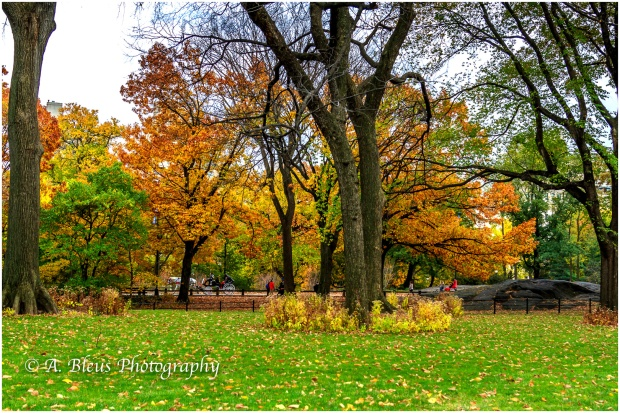 central-park-in-the-fall-mg_1437-2