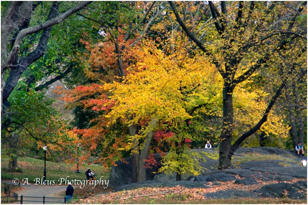 central-park-in-the-fall-mg_1437