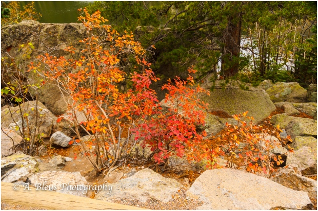 gold-yellow-red-rocky-mountains-co-_93e1829