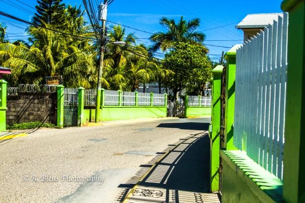 green-wall-roatan-honduras-mg_5528