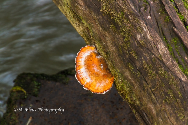 Fungi and white gummy substance at Iguazy Falls, Agentinian side MG_9818-2