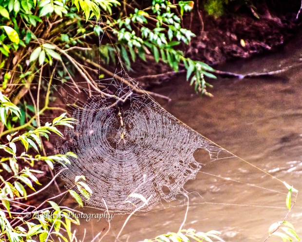 Spider Web, Iguazy Falls, Agentinian side MG_9577-2