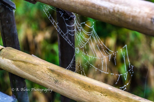 Spider Web, Iguazy Falls, Agentinian side MG_9577
